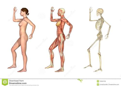 small resolution of a set of anatomical overlays depicting the side view of a woman an arm and leg bent these images will line up exactly and can be used to study anatomy