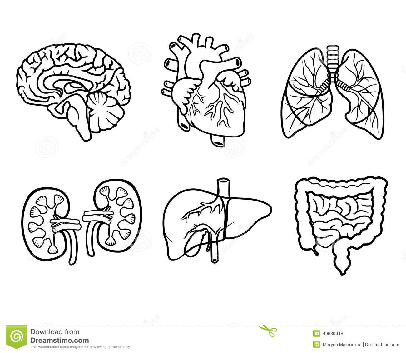 Human Anatomy Coloring Pages Sketch Coloring Page
