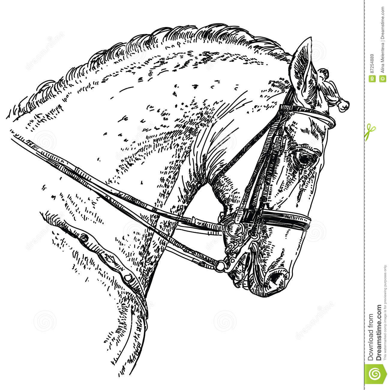 Andalusian Horse Hand Drawing Illustration Stock Vector