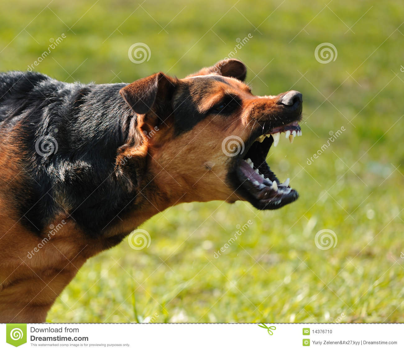Angry Dog Stock Photo Image 14376710