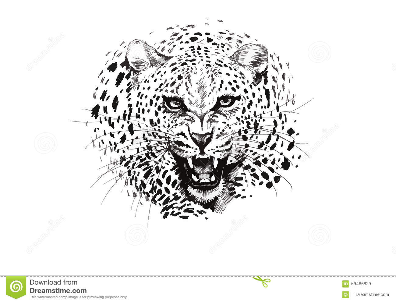 Angry Leopard Muzzle Black And White Sketch Stock Vector
