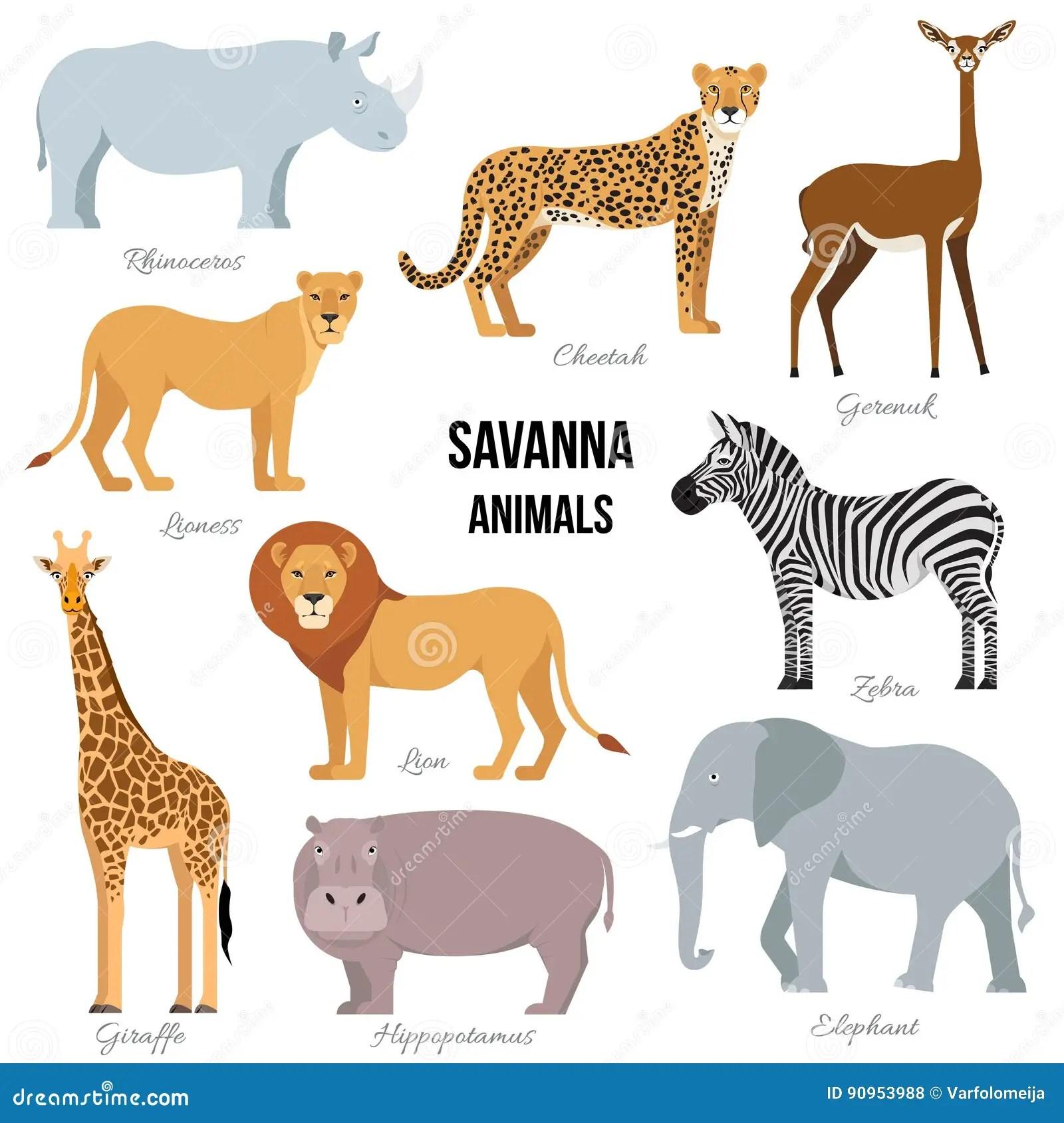 Savana Zebra Ilustracoes Vetores E Clipart De Stock
