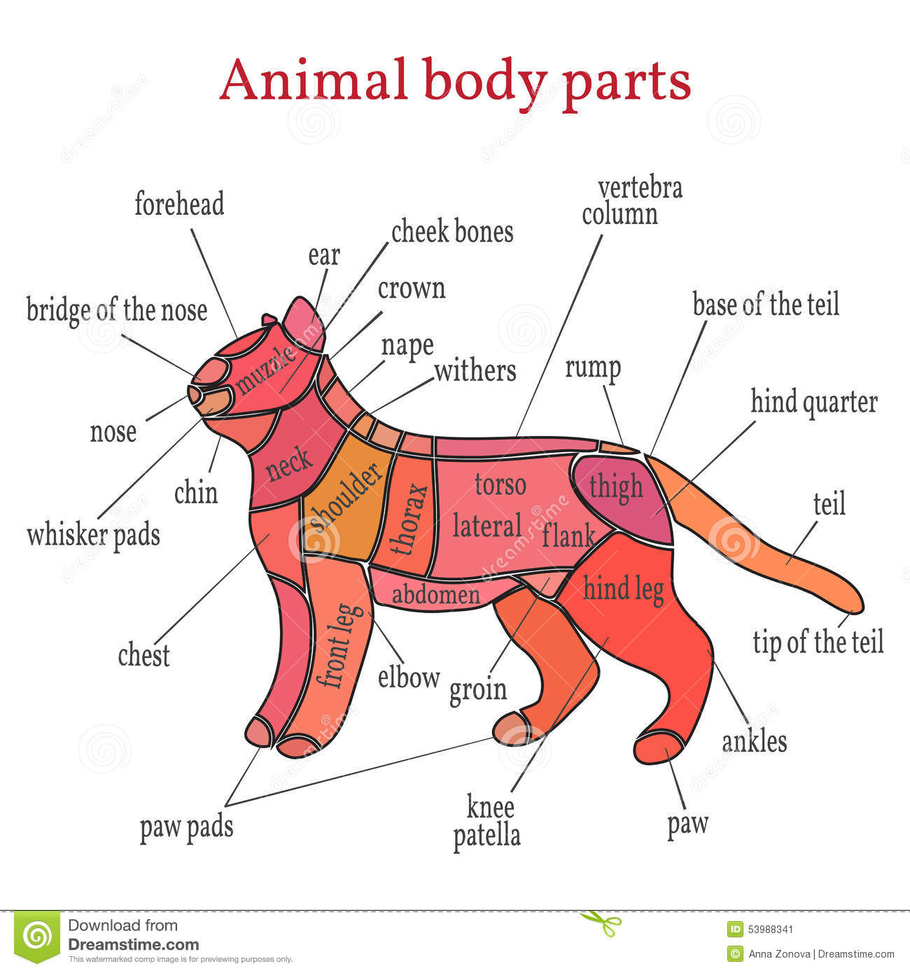 hight resolution of animal body parts stock vector illustration of spine 53988341 cat body parts diagram lion body parts diagram