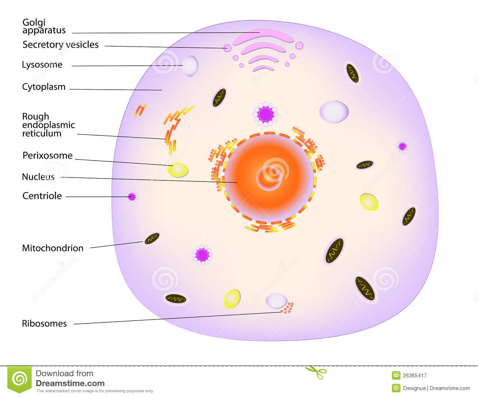 animal cloning diagram glass eye parts cell stock vector illustration of cytoplasm nano
