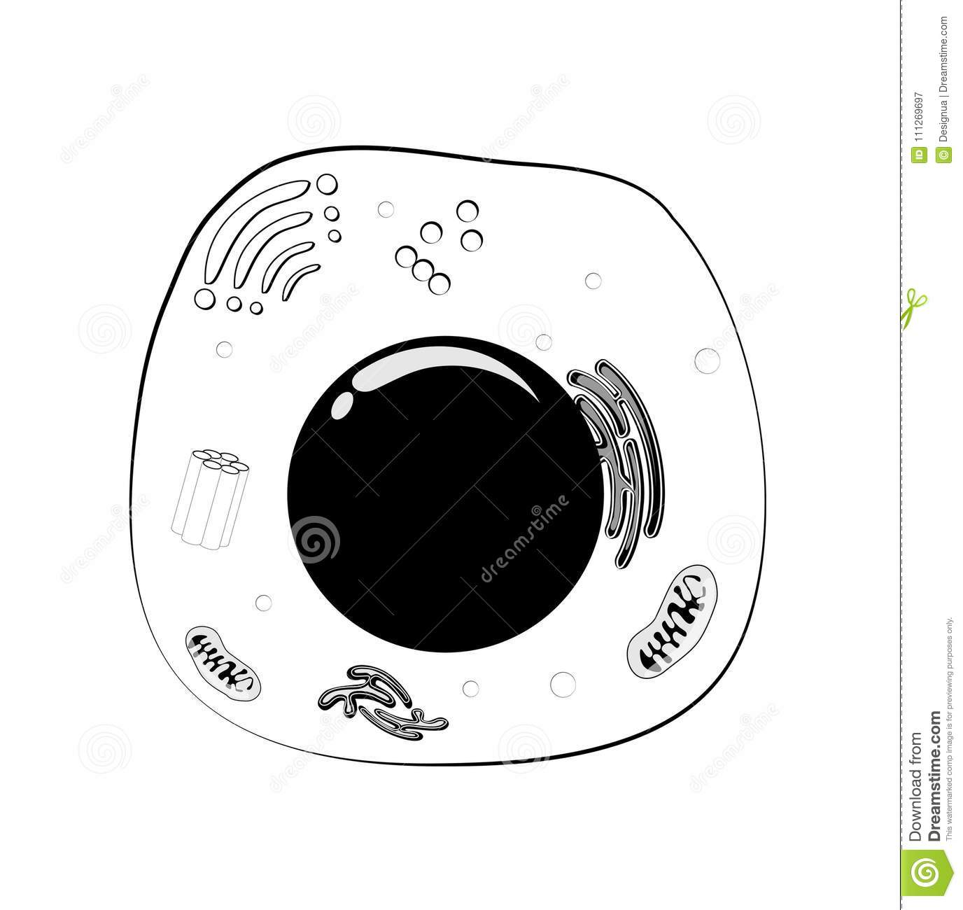 Animal Cell Structure Black And White Vector Stock Vector