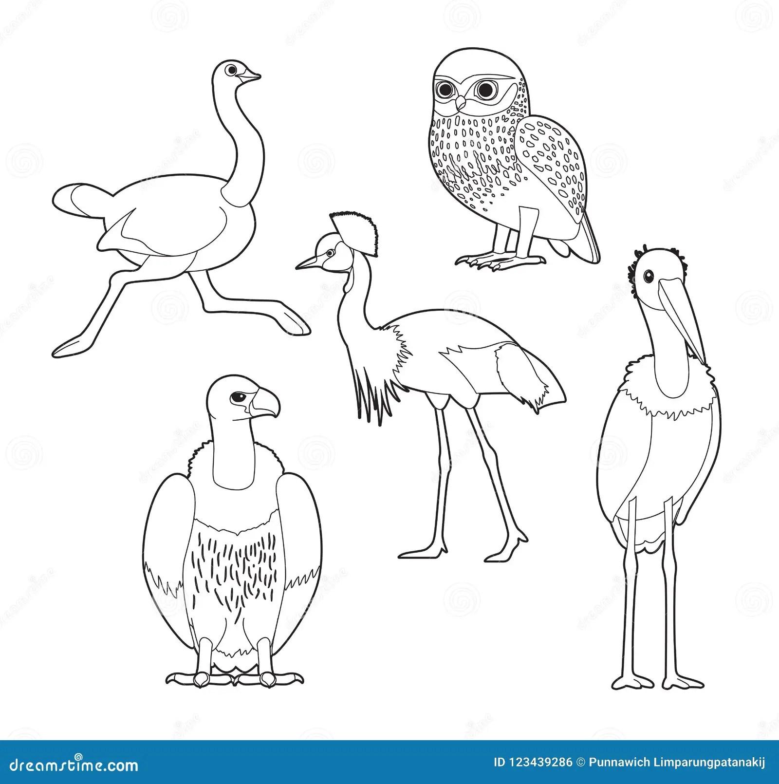 African Bird Coloring Book Owl Ostrich Crane Vulture Stork