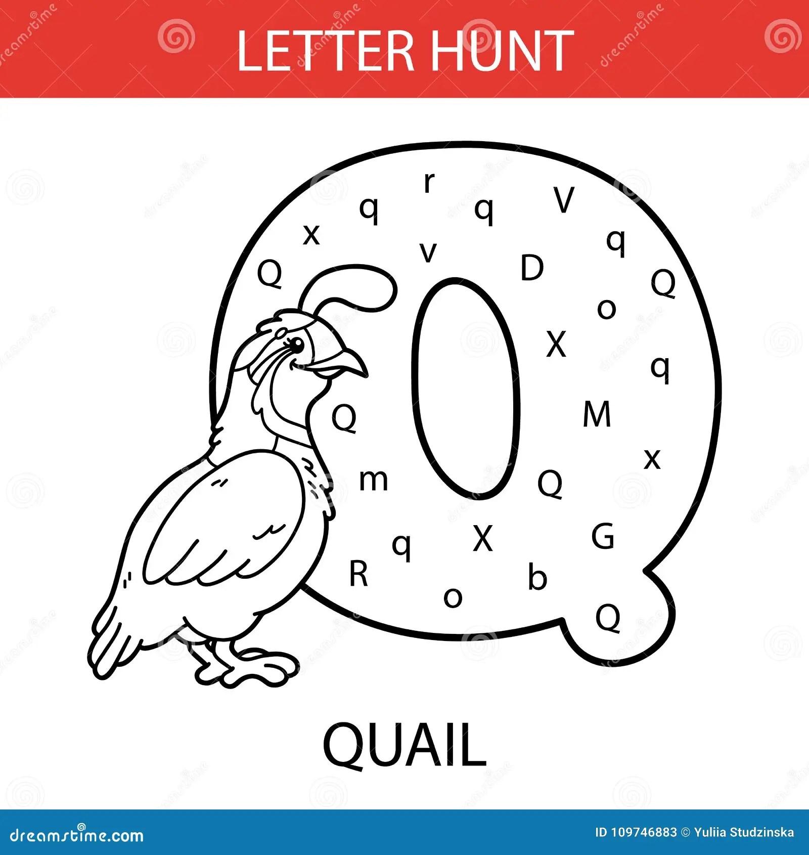 Animal Letter Hunt Quail Stock Vector Illustration Of