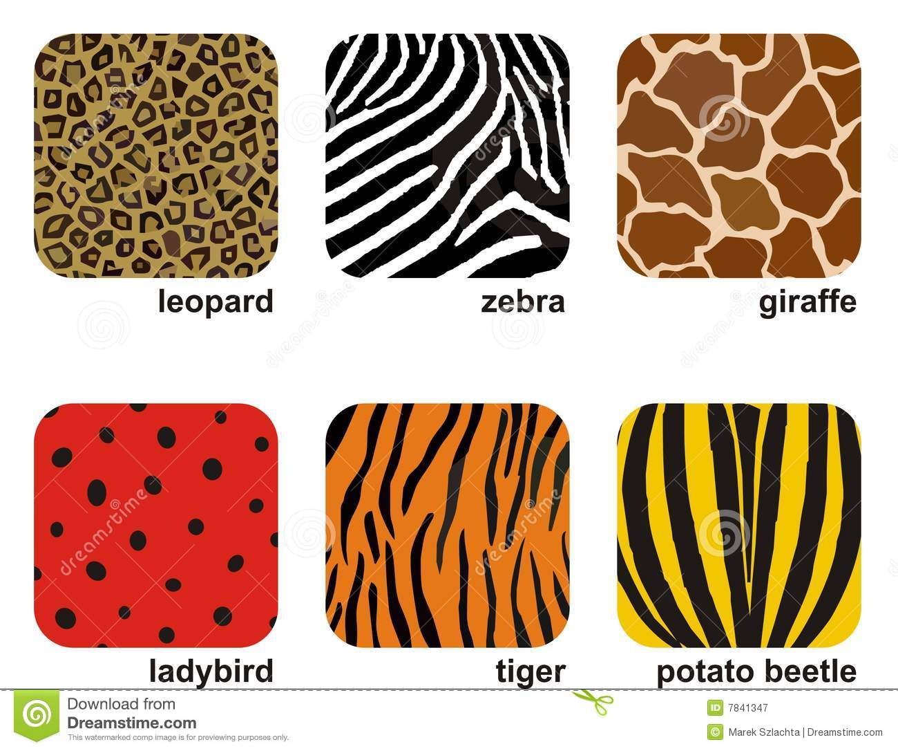 Animal Prints Stock Vector Illustration Of Insect