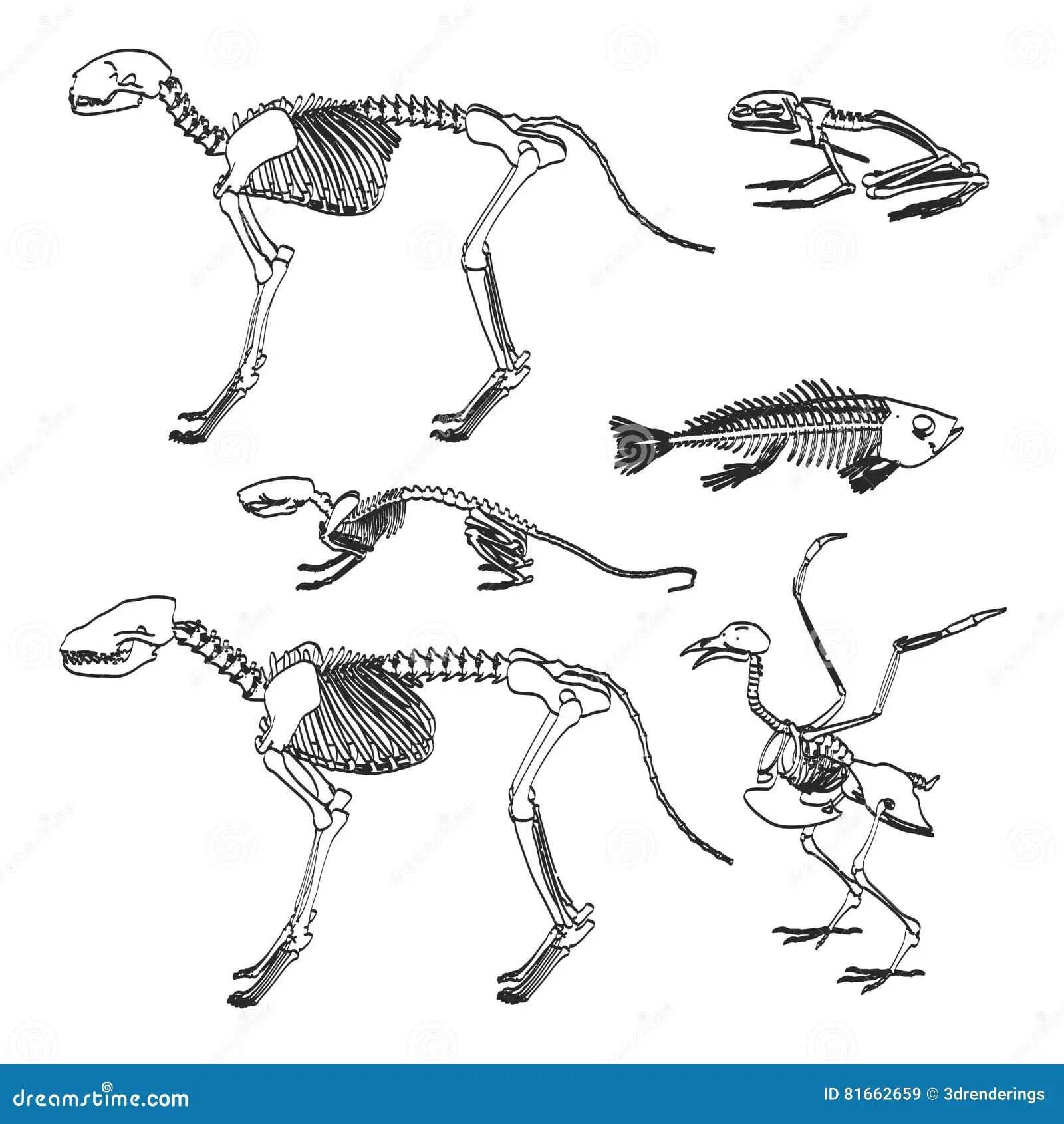 Animal skeletons stock illustration. Illustration of