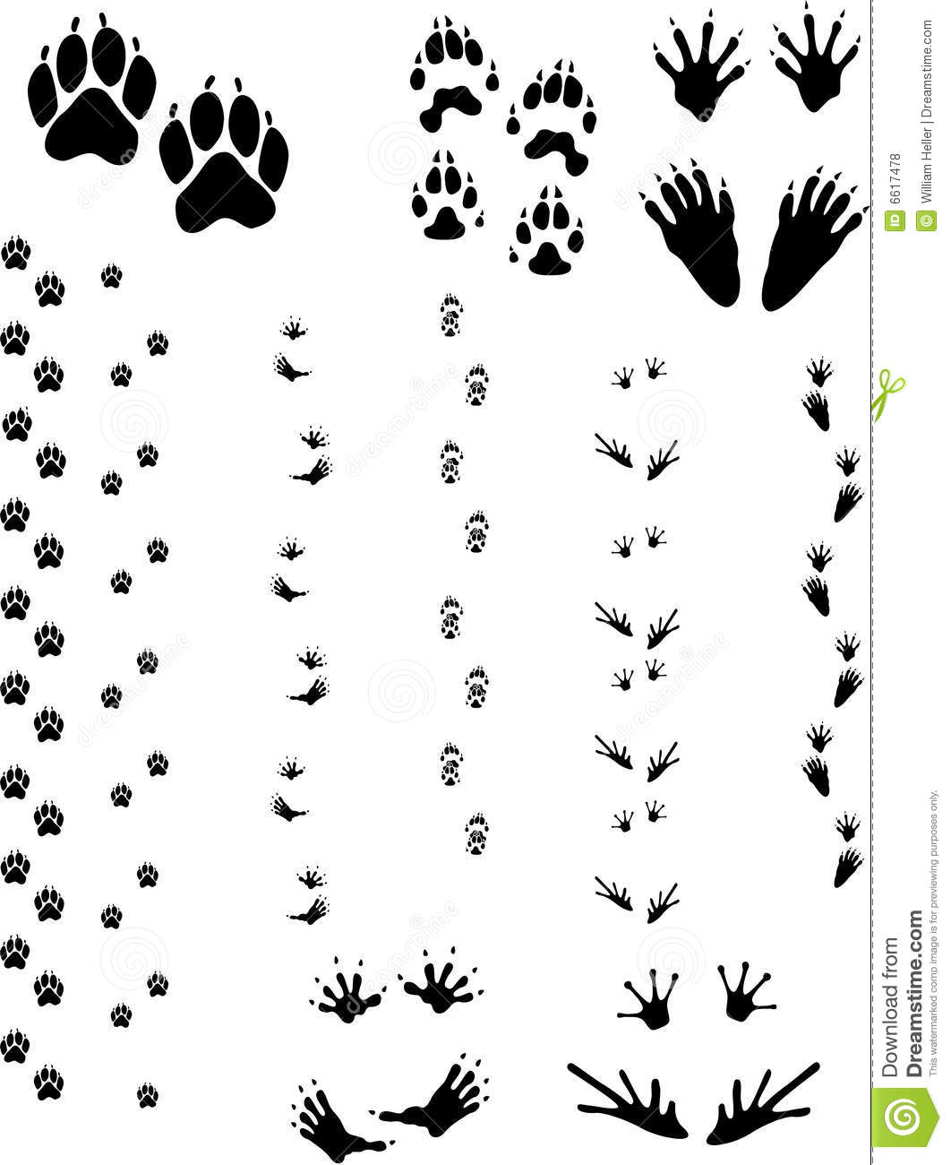 Animal Tracks 01 Stock Vector Illustration Of Gulo Lotor