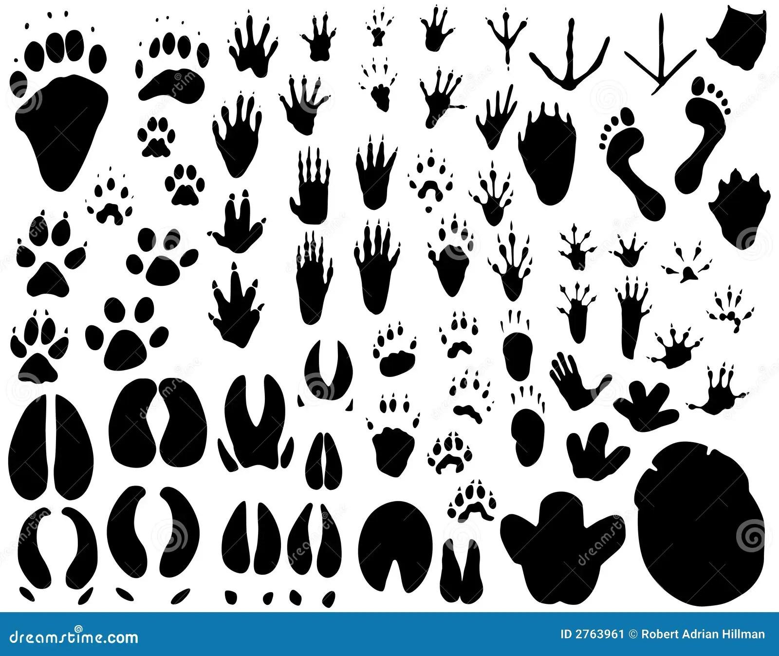 Animal Tracks Stock Vector Illustration Of Footprint