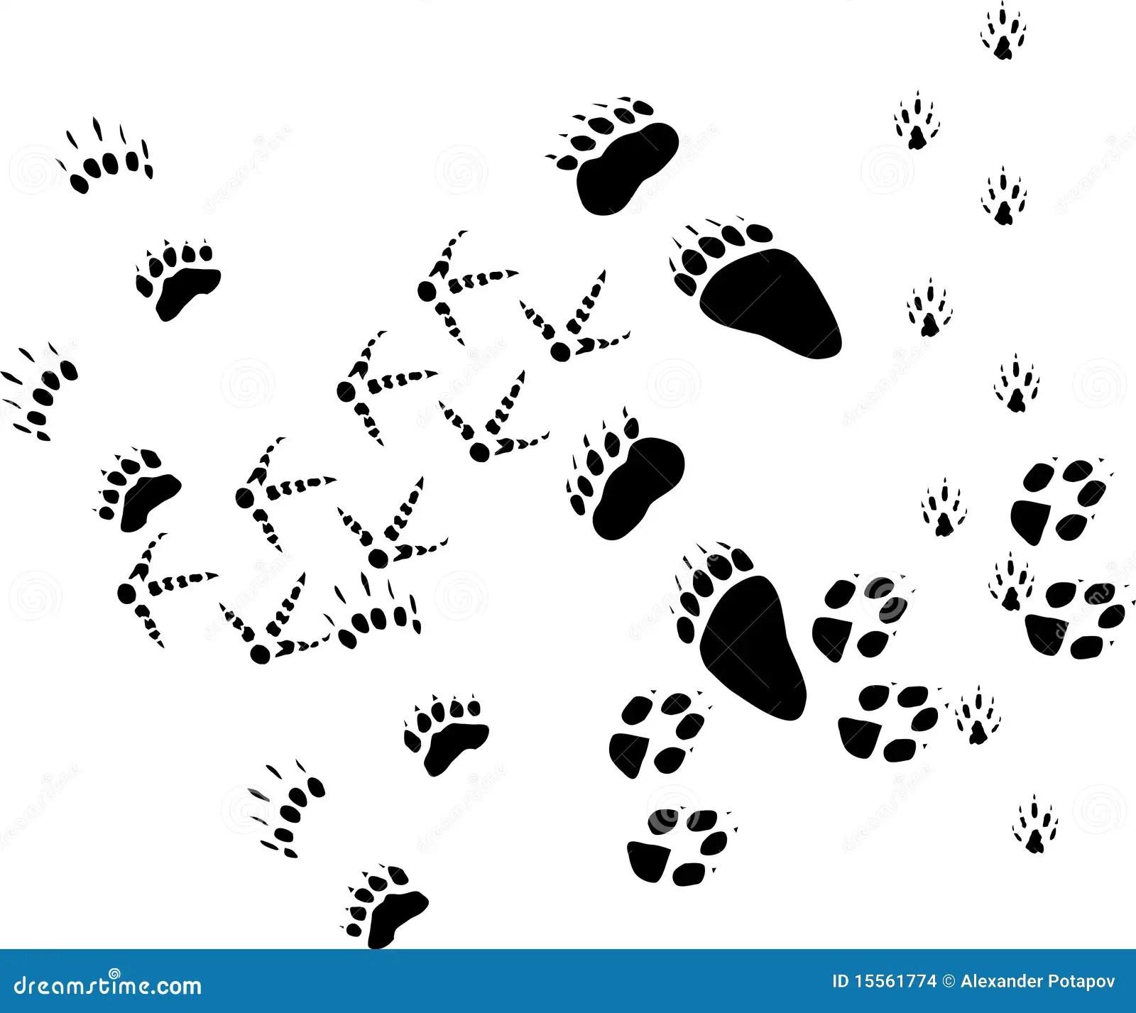 Animal Tracks On White Stock Vector Illustration Of
