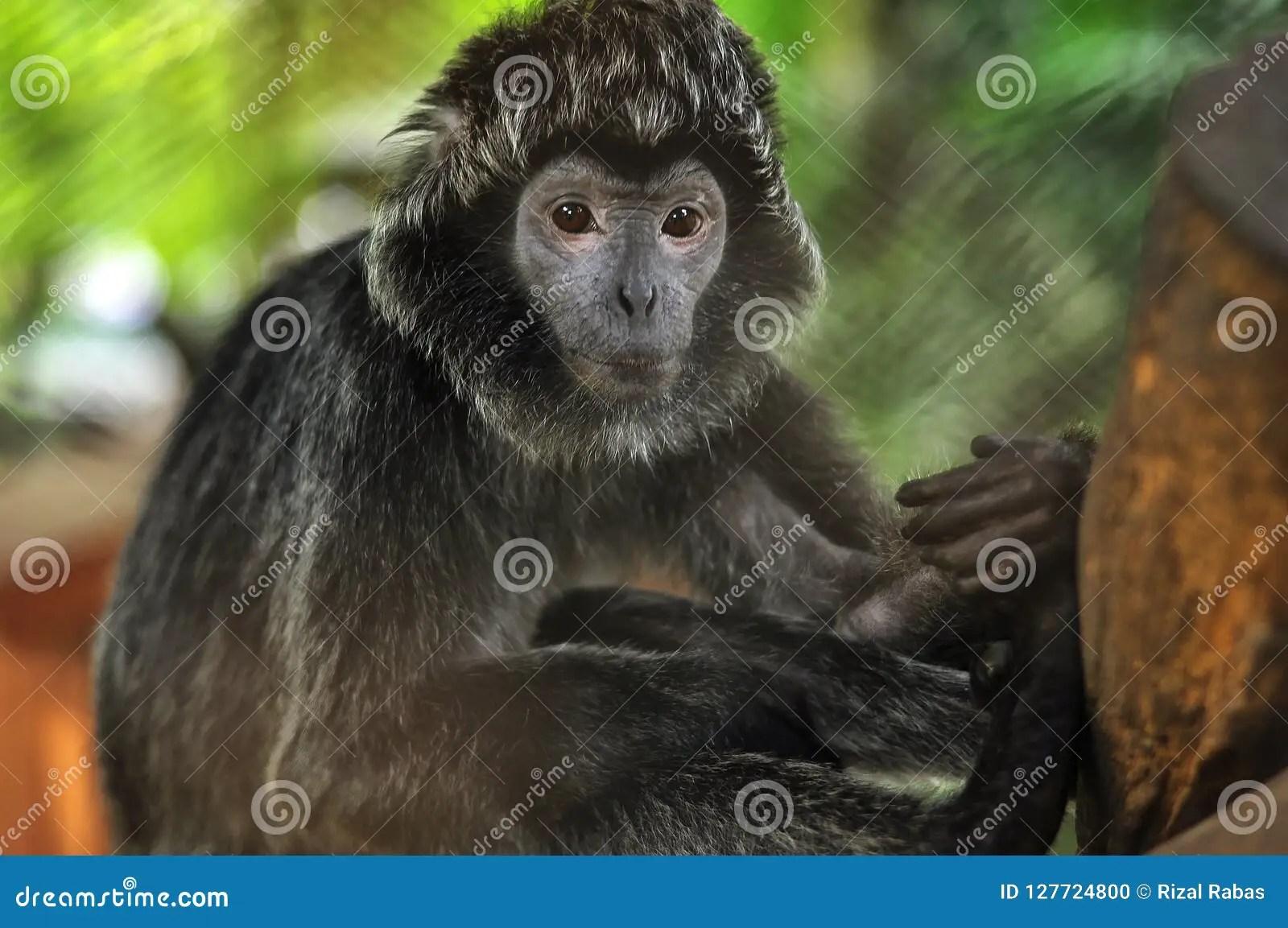 monkey type animals stock