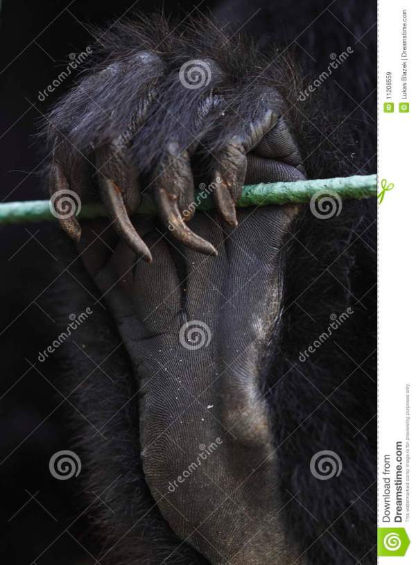 20 Ape Hand Pictures And Ideas On Stem Education Caucus