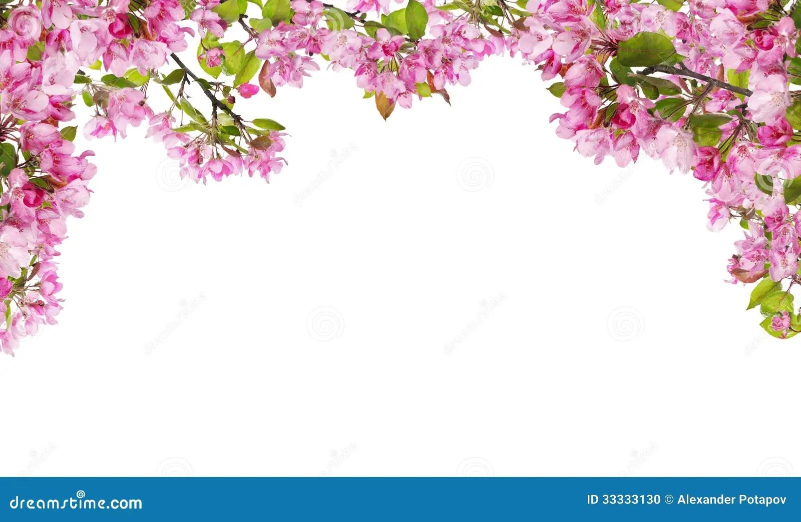 Falling Rose Petals Live Wallpaper Apfelbaum Rosablume Verzweigt Sich Halber Rahmen Stockfoto