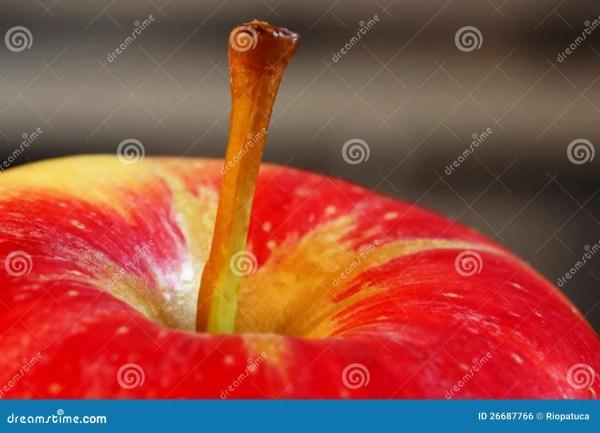Apple Stem Clip Art