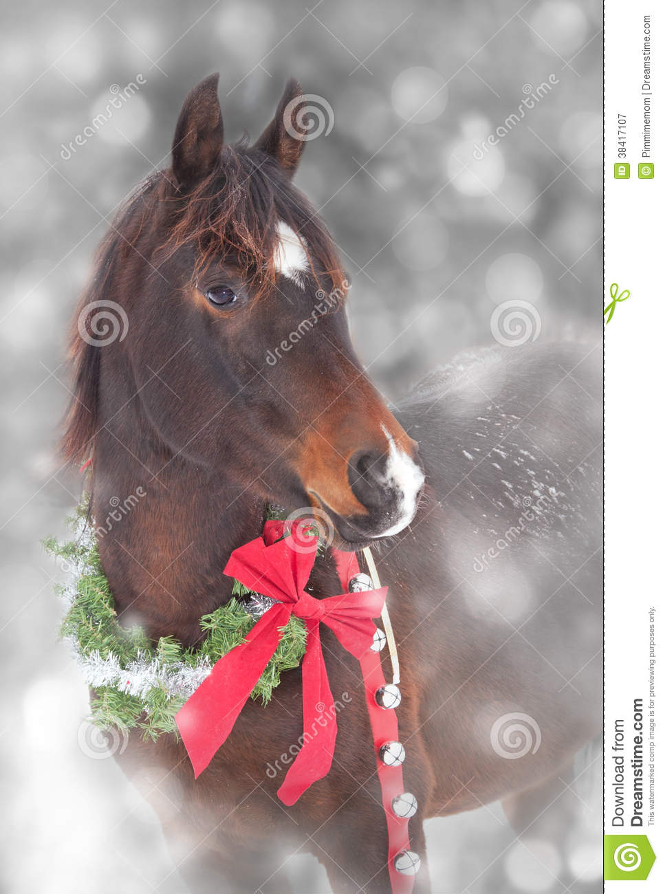 Arabian Horse With A Christmas Wreath Stock Image Image