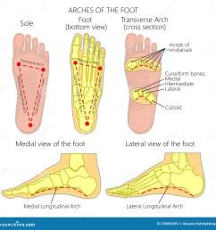 diagram bottom of feet wiring diagram forward diagram of muscles on bottom of foot diagram bottom of foot [ 1300 x 1335 Pixel ]