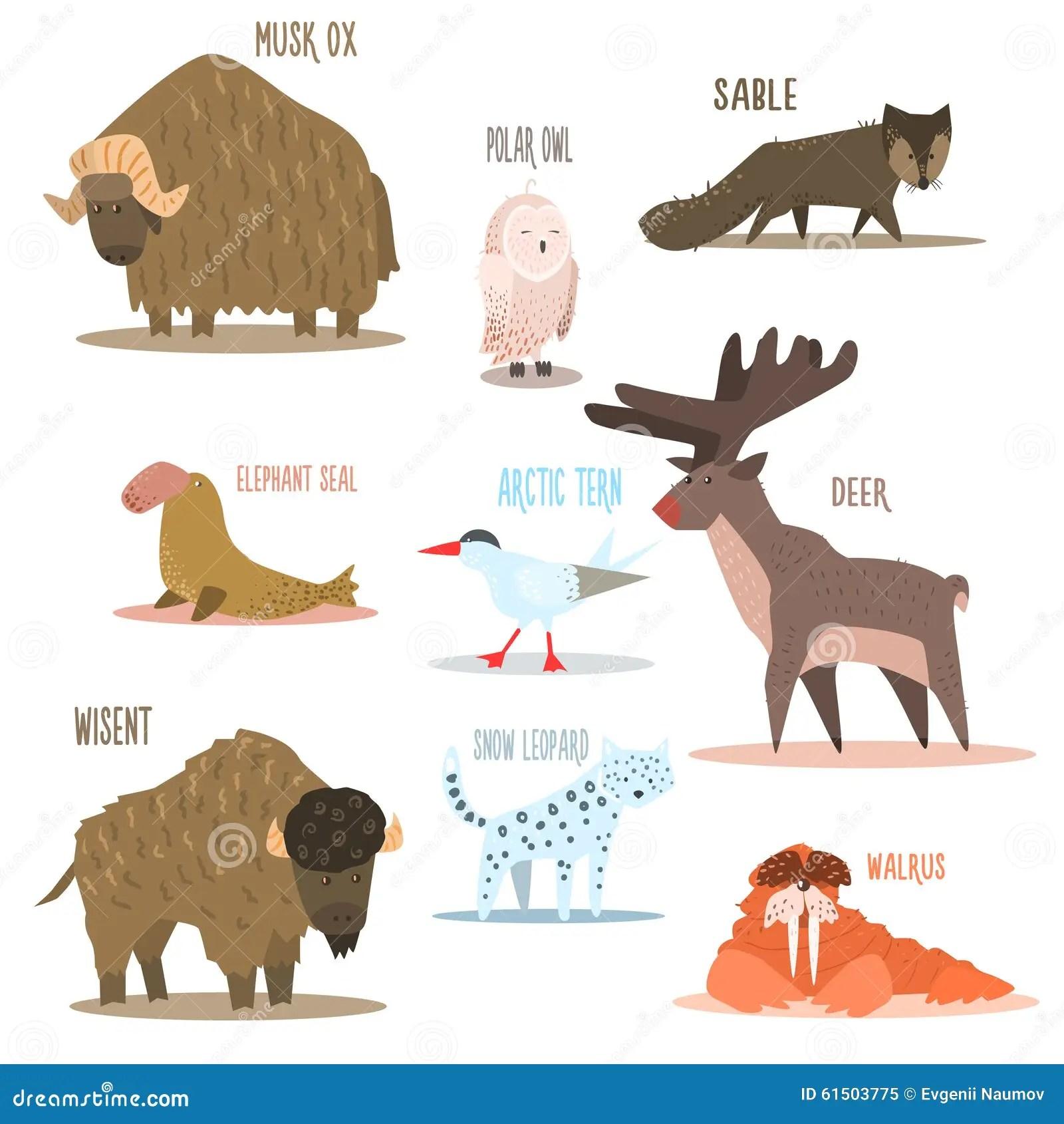 Arctic And Antarctic Animals Birds Vector Stock Vector
