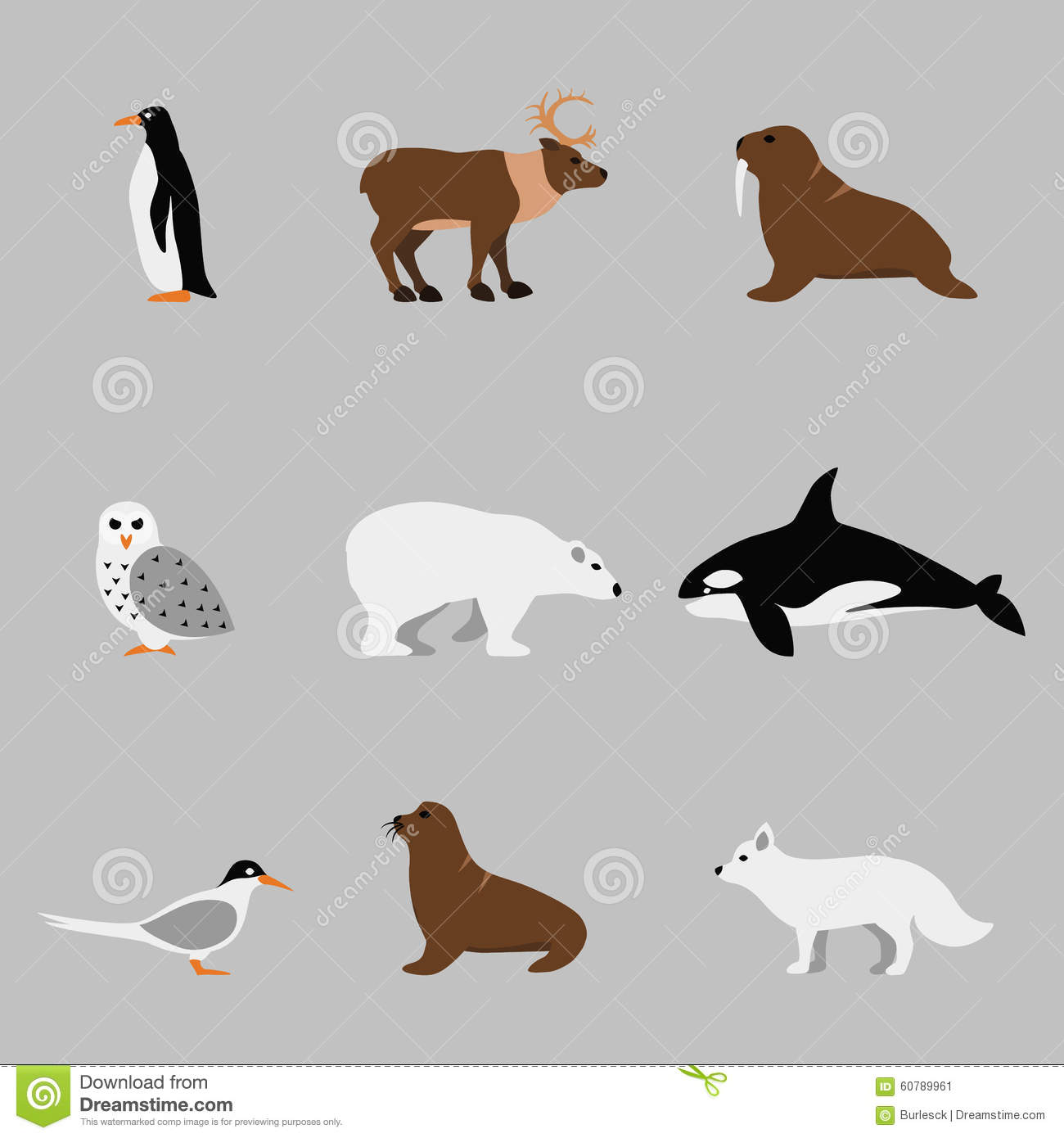 Arctic And Antarctic Animals Set In Flat Vector Stock