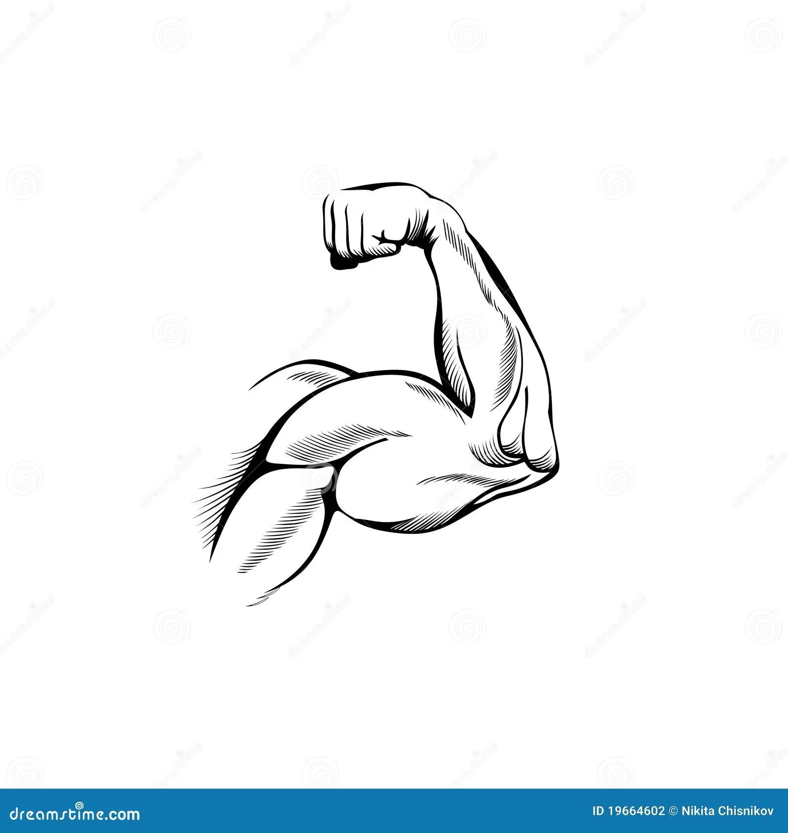 Arm Muscles Stock Illustration Illustration Of Builder