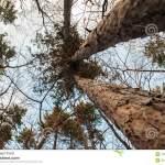 Art Abstract And Artistic Fisheye View Forest And Tree Branch Stock Photo Image Of Decoration Lens 109428584