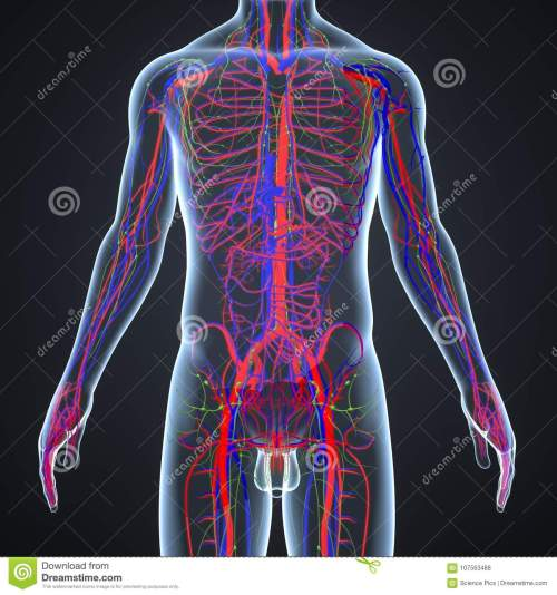 small resolution of there are two types of blood vessels in the circulatory system of the body arteries that carry oxygenated blood from the heart to various parts of the body