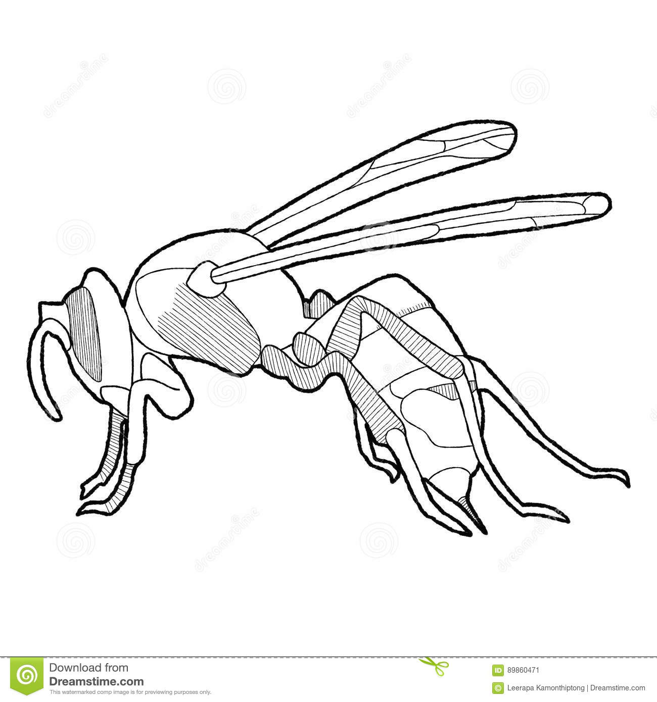 Wasps In Asia