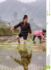 Asian Young Farmer Woman Walks Barefoot Mud Of