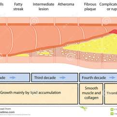 Swallowing Food Diagram B Tree Index In Oracle With Anatomy Mechanism Pearlywhisper