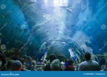 Atlanta Aquarium Editorial Of Marine