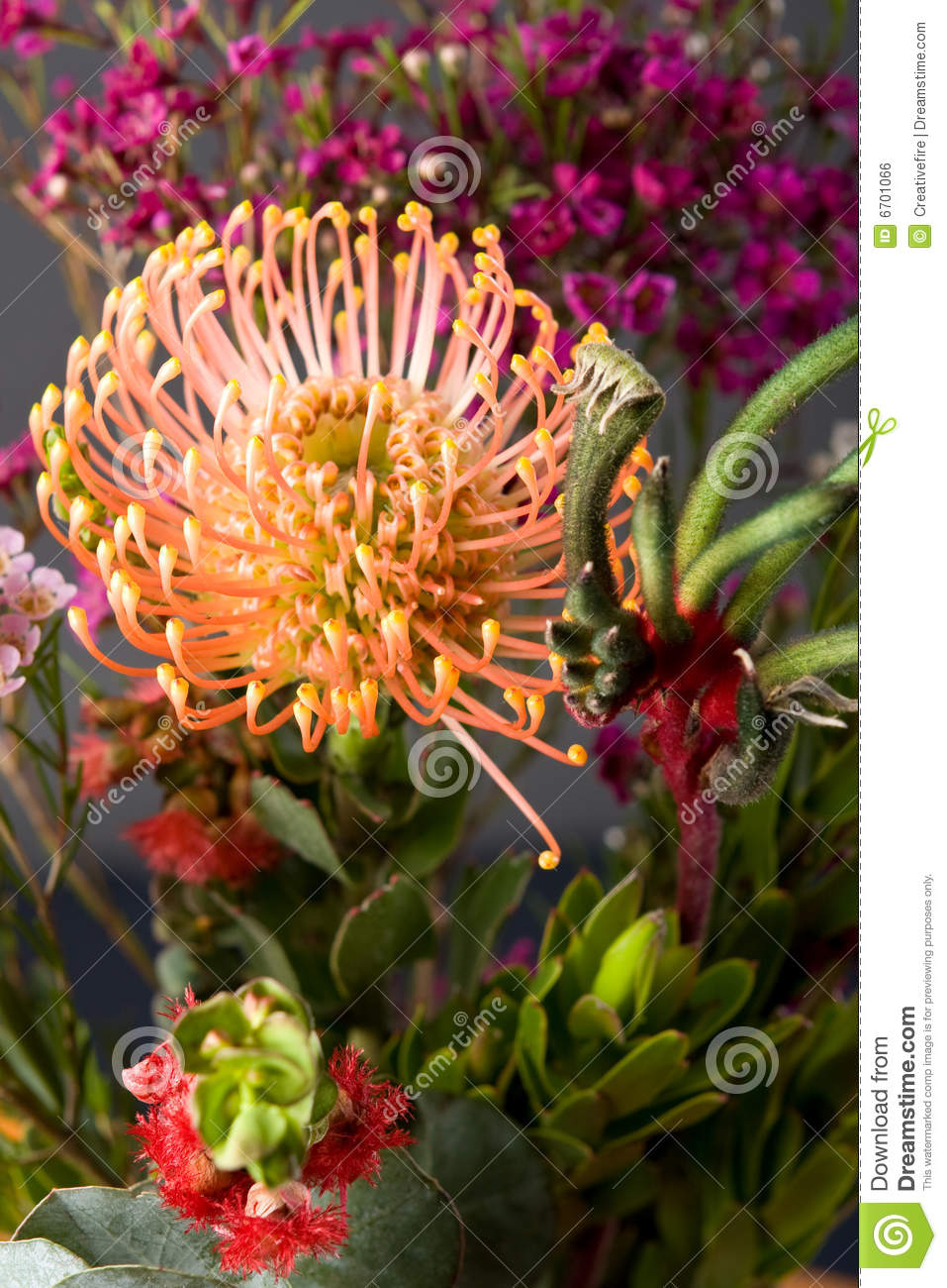 Australian Native Flower Bouquet Royalty Free Stock Image  Image 6701066