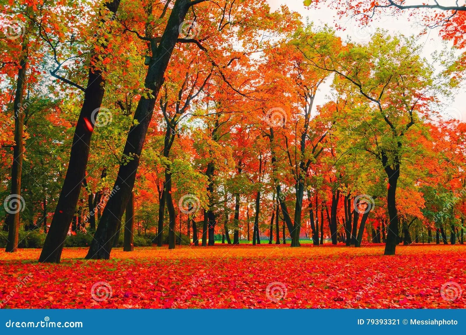 autumn bright nature red