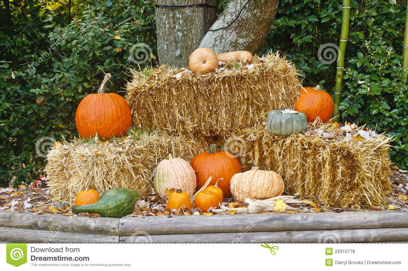 Fall Scenes Wallpaper With Pumpkins Autumn Display Of Straw And Pumpkins Stock Photo Image