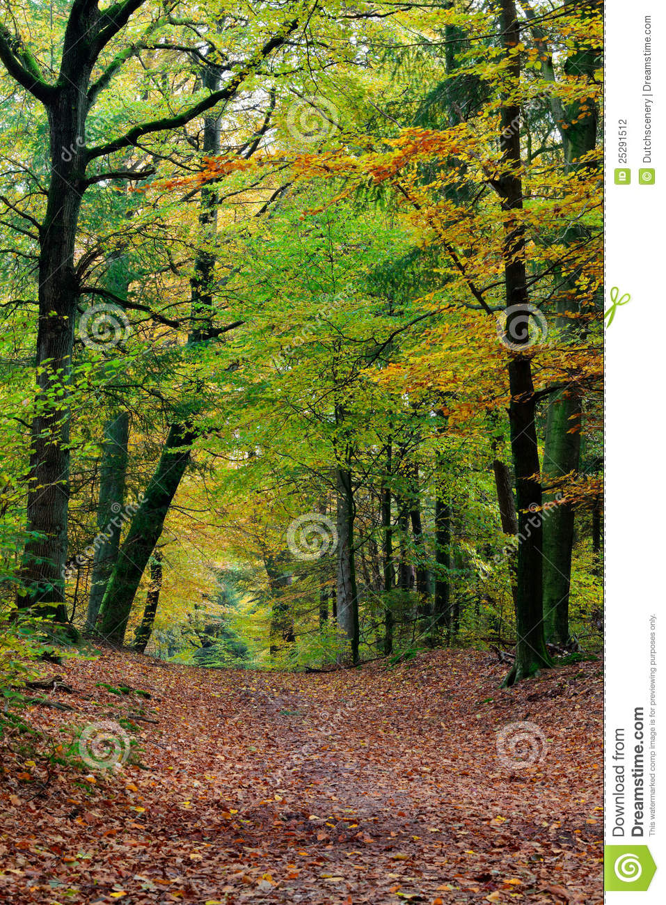 Fall Walk Wallpaper Autumn Fall Forest Scene With Vibrant Colors Stock Photo