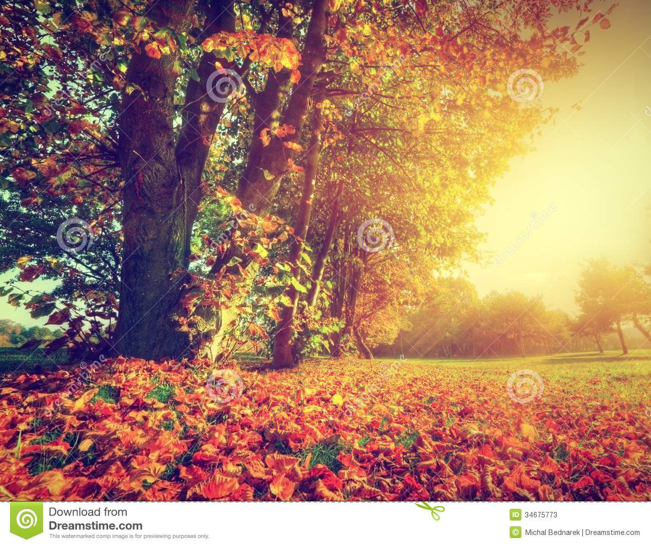 Vector Wallpaper Fall Colors Autumn Fall Landscape In Park Stock Image Image 34675773