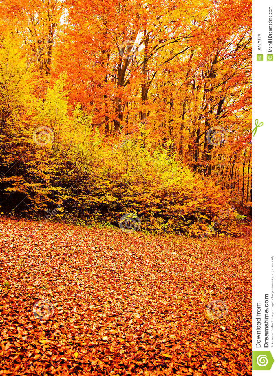 Fall Brithday Wallpaper Autumn Forest Fall Nature Royalty Free Stock Image Image