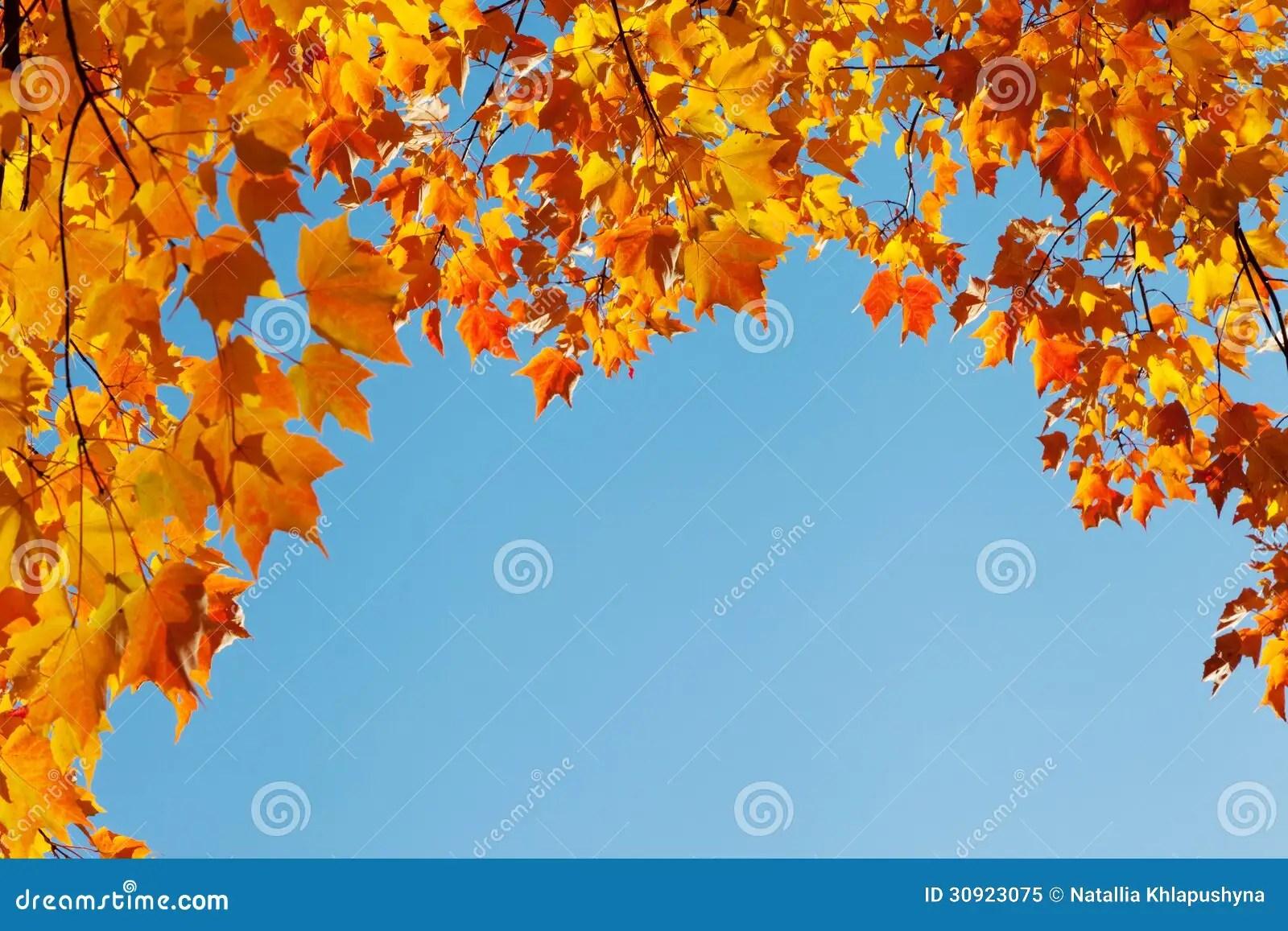 Fall Leaves Wallpaper Border Autumn Leaves On Blue Sky Border Frame Stock Image