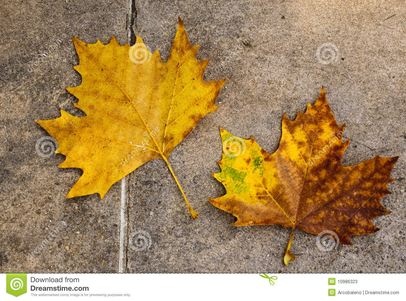 Autumn Leaf Fall Wallpaper Autumn Leaves On The Floor Stock Photos Image 10986323