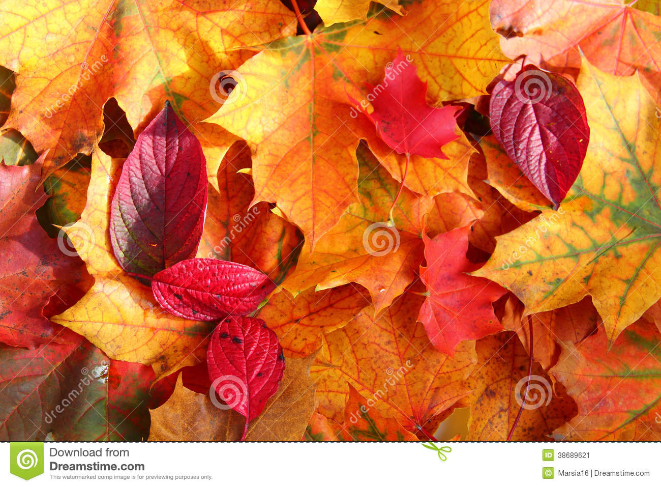 Orange Fall Wallpaper Autumn Leaves In Sunlight Stock Image Image Of Brown