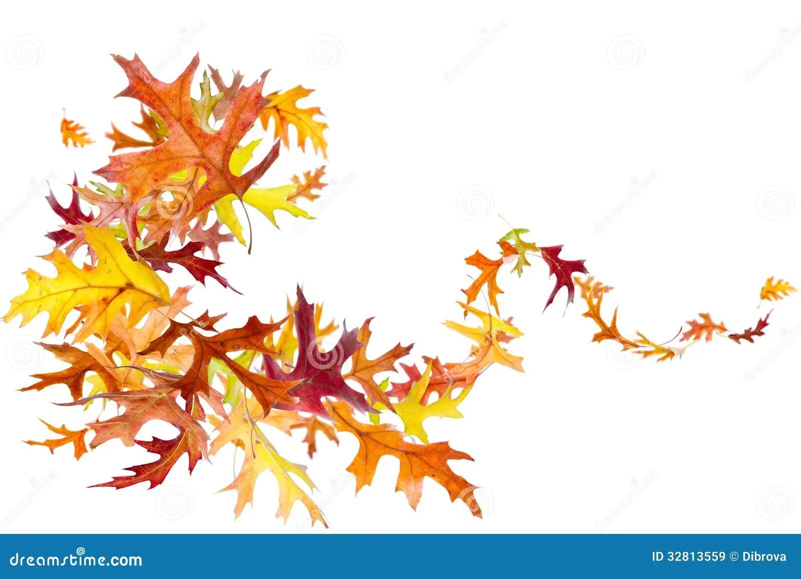 Wallpaper Border Falling Off Autumn Leaves Swirl Stock Image Image Of Vibrant