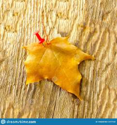 autumn maple leaves clipart on wooden table falling leaves natural background [ 1600 x 1689 Pixel ]
