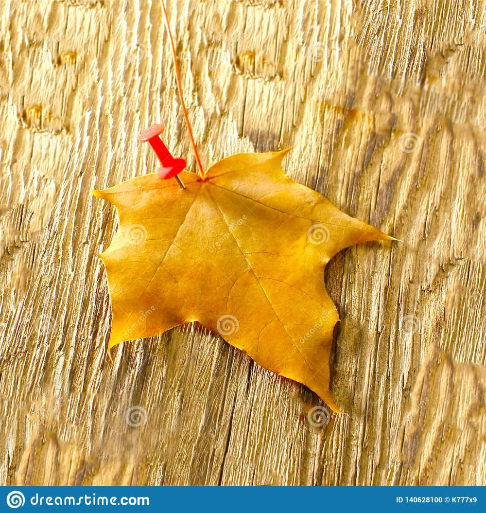medium resolution of autumn maple leaves clipart on wooden table falling leaves natural background
