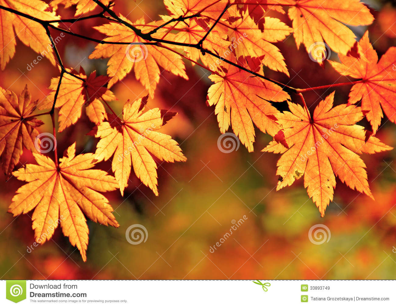 Fall Pumpkin Computer Wallpaper Autumn Maple Leaves Stock Image Image Of Over Wallpaper