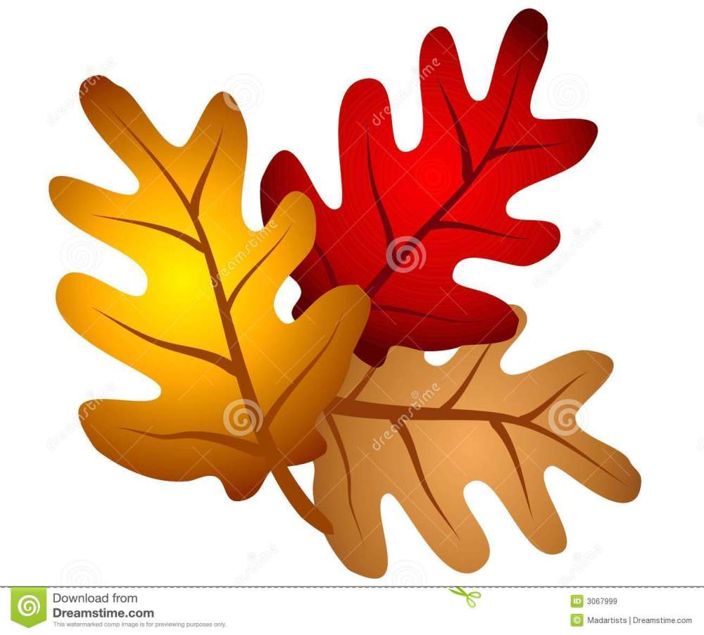 medium resolution of a clip art illustration of an isolated arrangement of autumn oak tree leaves in red gold and brown