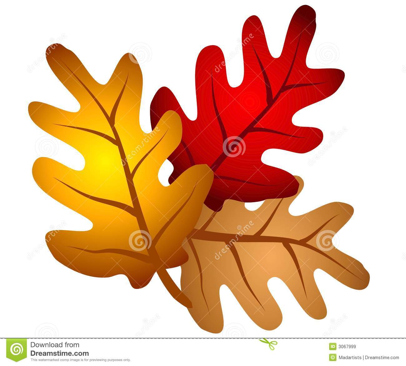 hight resolution of a clip art illustration of an isolated arrangement of autumn oak tree leaves in red gold and brown
