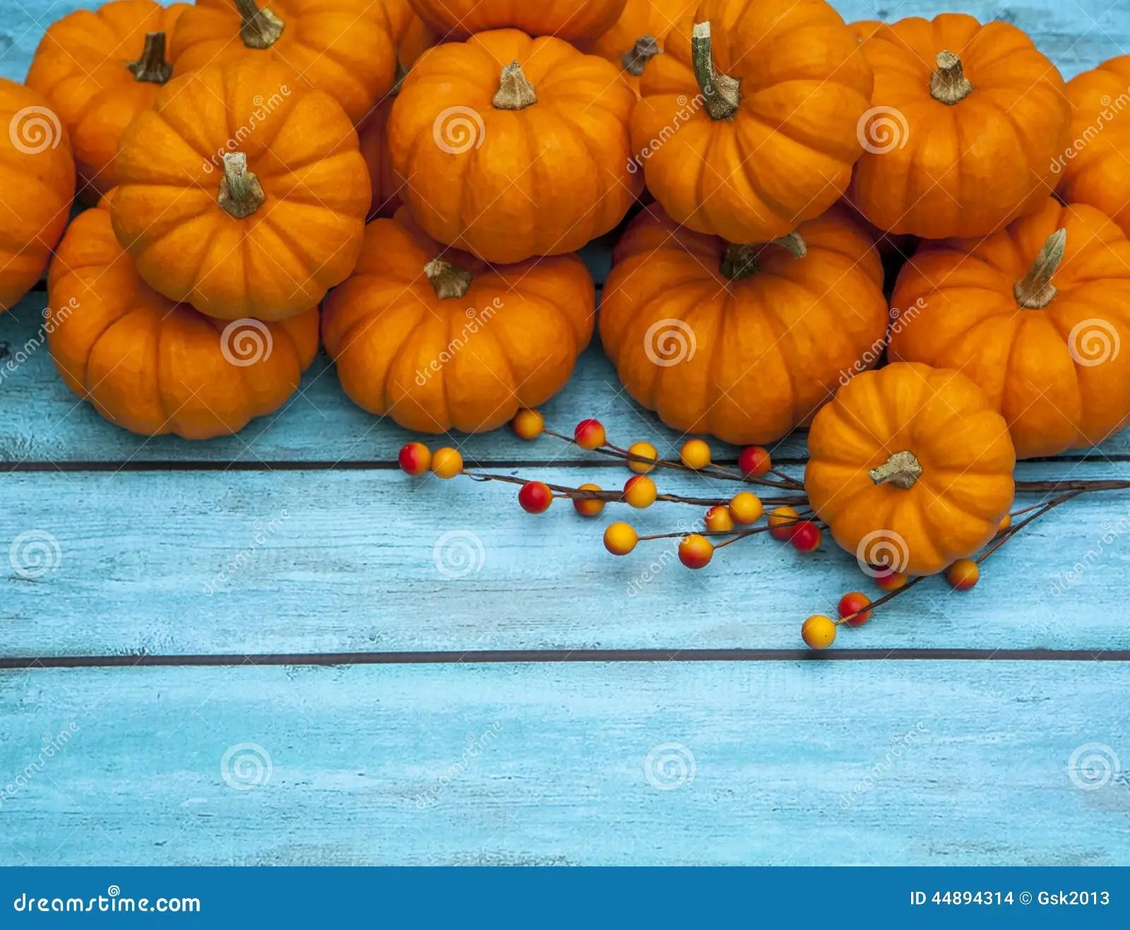 Fall Kitten Wallpaper Autumn Pumpkin Thanksgiving Background Stock Photo Image
