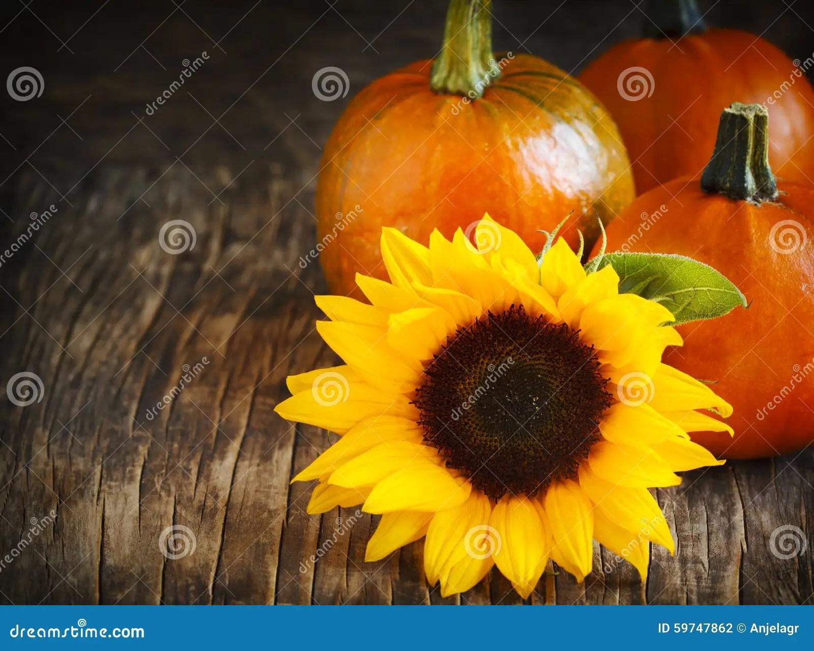 Pumpkin Fall Wallpaper Autumn Pumpkins And Sunflower Stock Photo Image Of