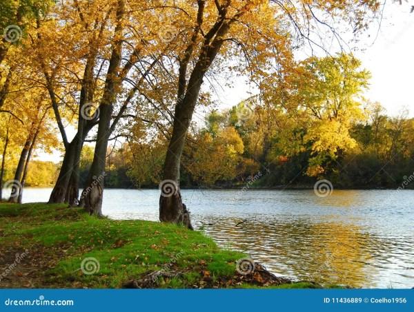 autumn riverbank landscape royalty