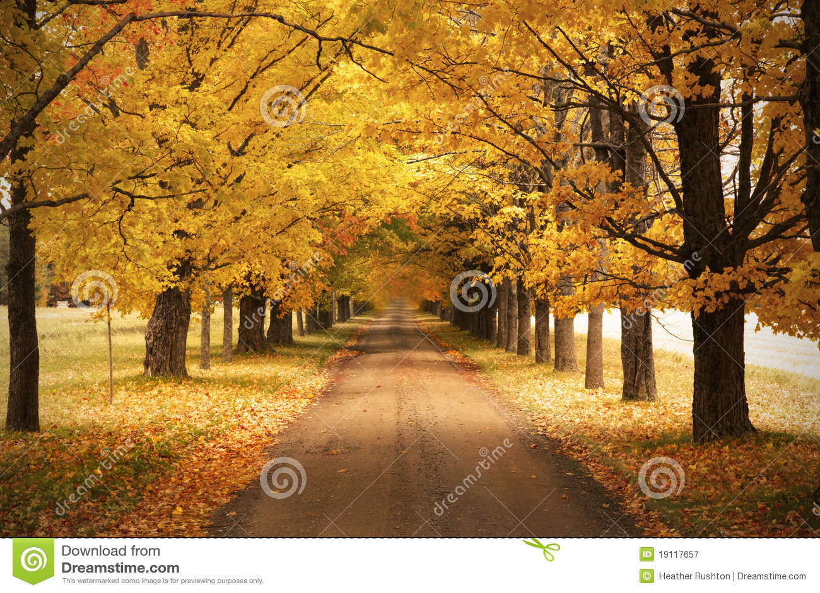 Fall Foliage Computer Wallpaper Autumn Road Stock Image Image Of Color Autumn Fallen